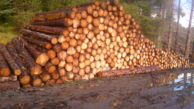 Inverness Firewood